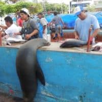 a local at the fish market on santa cruz