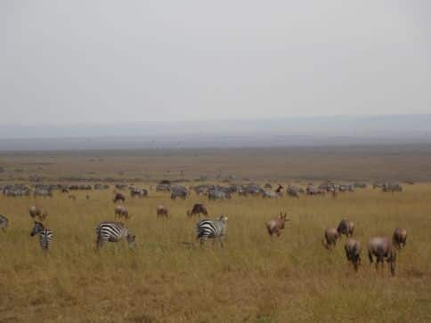 safari viewing in Kenya
