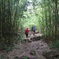 hike through bamboo hawaii