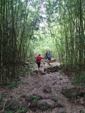 hike through bamboo hawaii