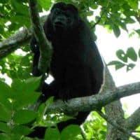 monkey at Nicaragua treehouse