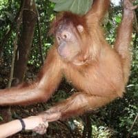 want a hug? Sumatra Indonesia