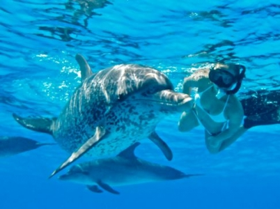 swimming with wild dolphins hawaii