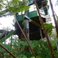 volcano treehouse Hawaii