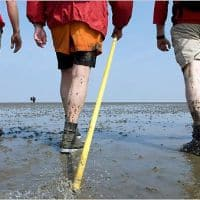 wadlopen in Netherlands