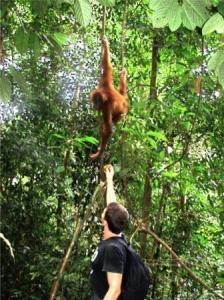 robert in jungle