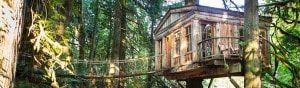 treehouse by seattle