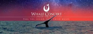 Whale Concert in Baja California