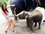 playing with baby elephants Thailand