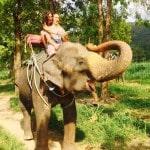 on the elephant farm in Thailand