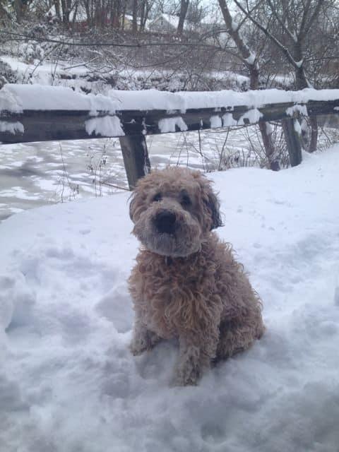 snowy Patrick, RFTD mascot