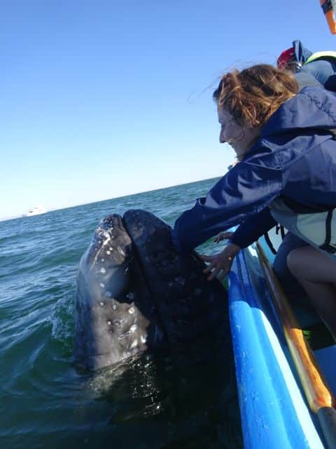 Allie petting baby Gray Whale in Baja