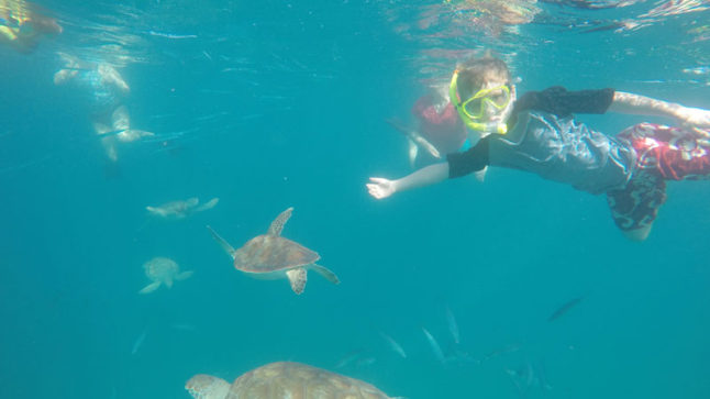 Shapiro kids swim with turtles in Barbados