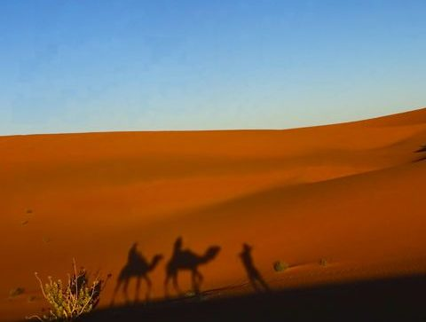 Riding camels to your desert camp in Morocco