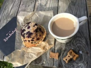 Blueberry muffin on Monhegan Island Maine