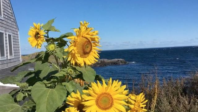 Beauty of Monhegan Island in Maine