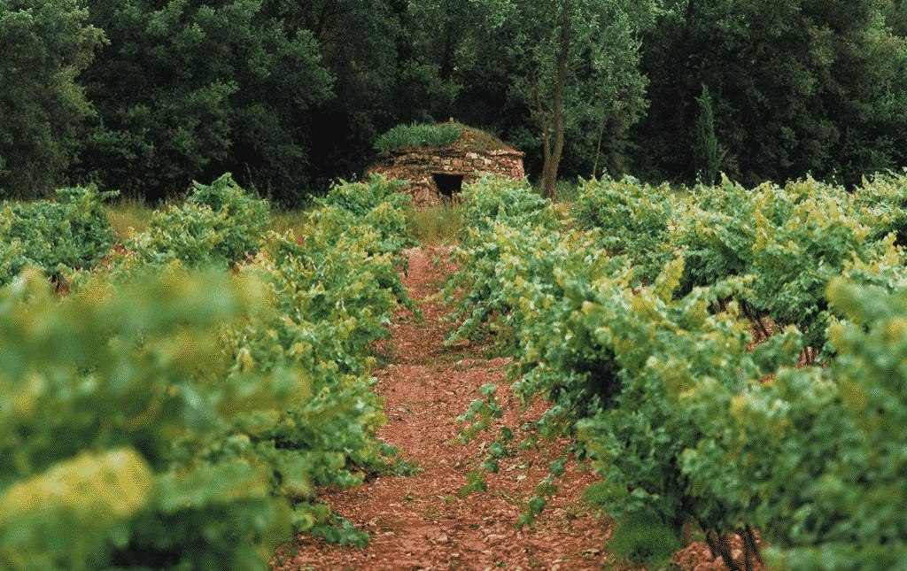 Spain-Abadal-winery-stone-vineyard-hut-for-landscape-tasting