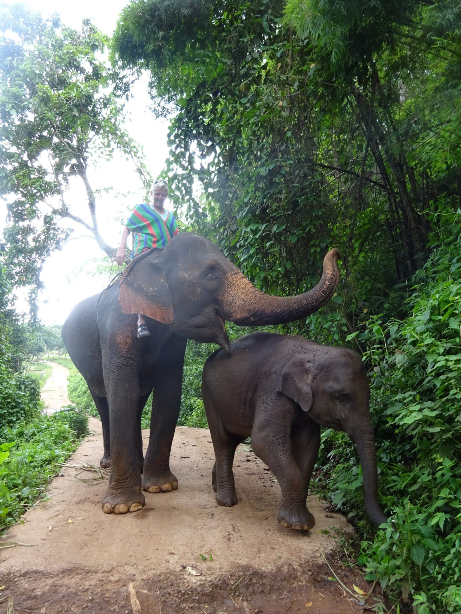 Thailand-Chang-Mai-riding-elephant-in-jungle-with-baby
