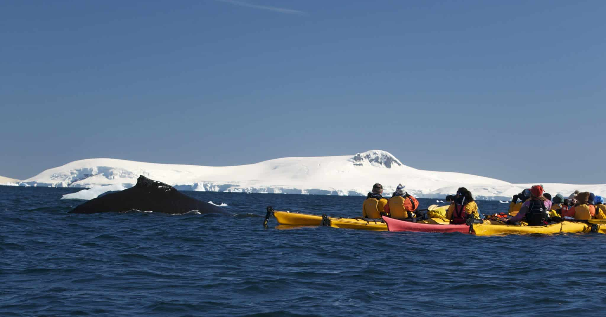 antarctica-kayak-with-whales