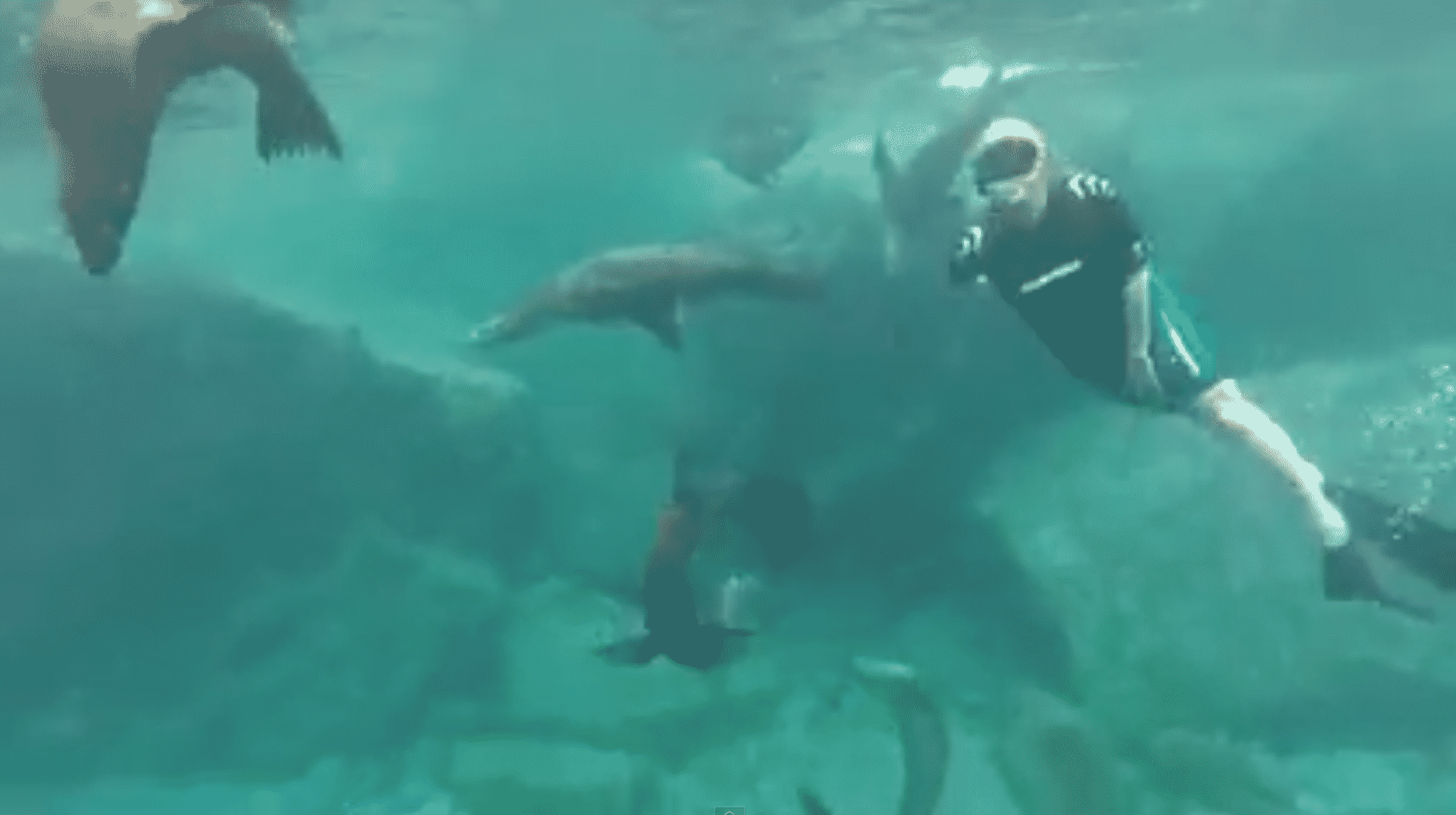 baja-melanie-ceo-rare-finds-travel-swims-with-sea-lions-los-islotes