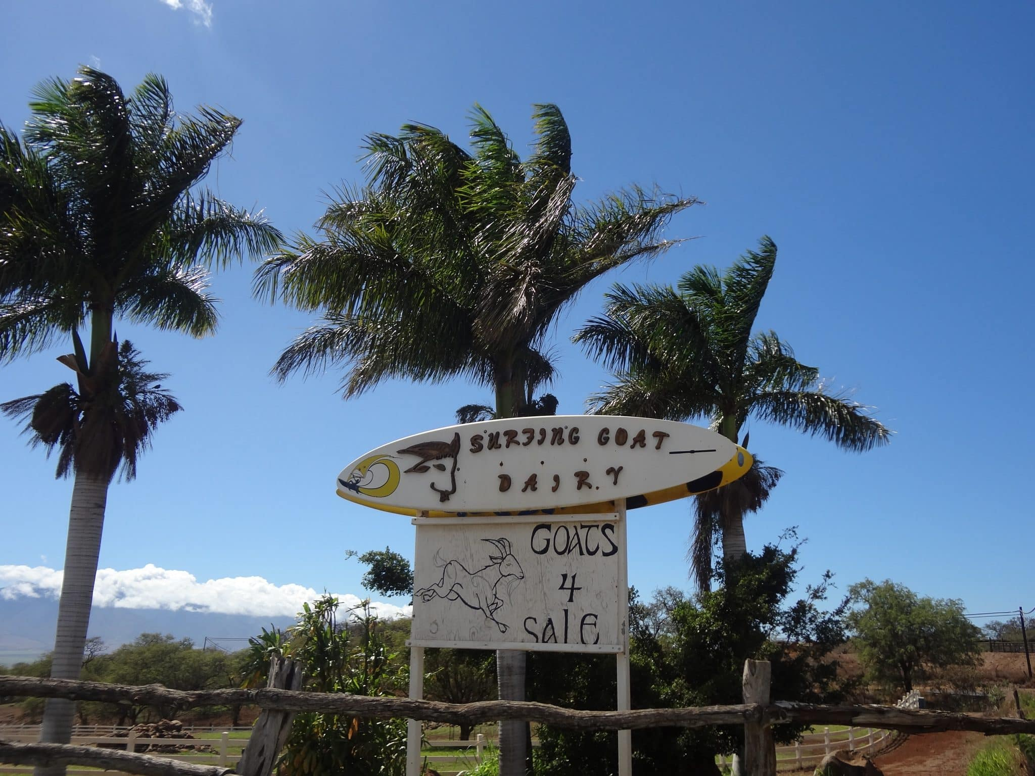 hawaii-sign-surfing-goat-dairy