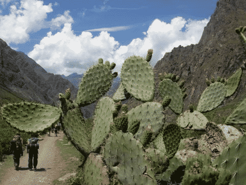 interesting-foliage-complete-the-beauty-of-the-incan-trail-hike-with-peru-treks