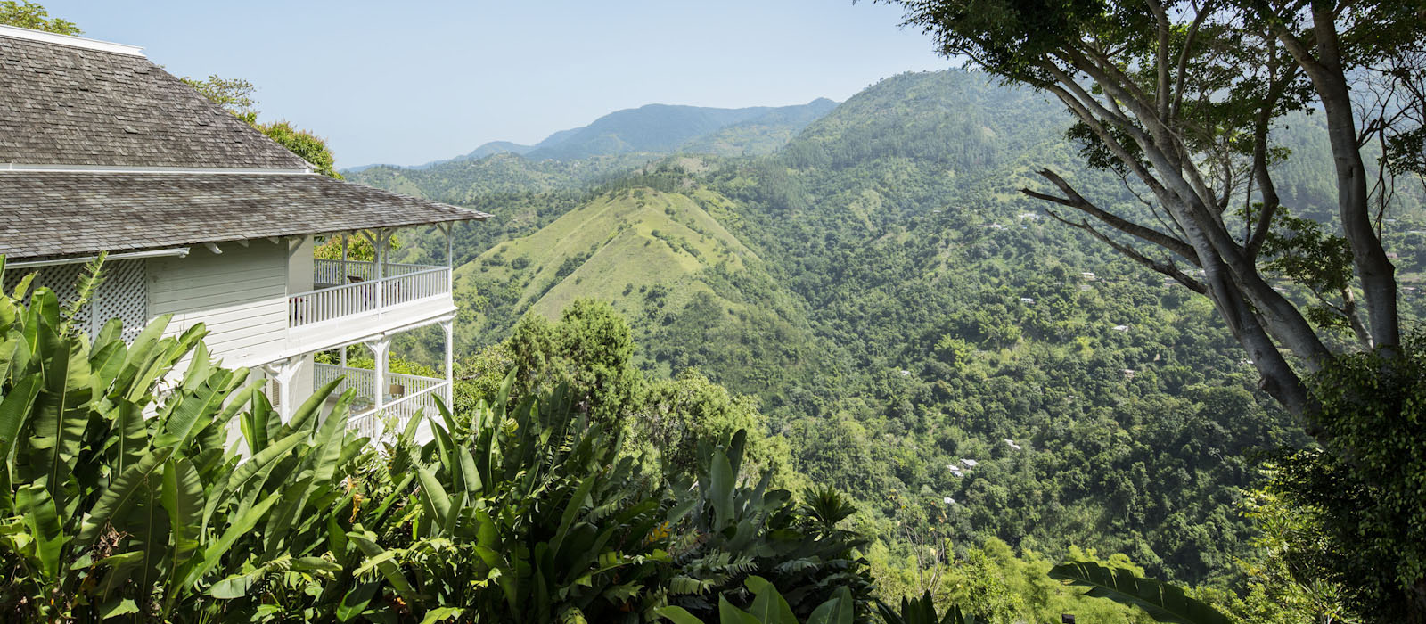 jamaica-strawberry-hill-coffee-mountains