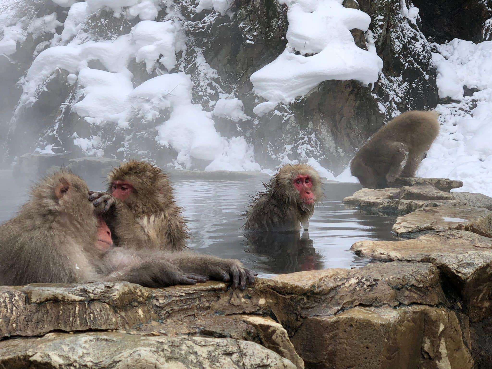 japan-nagano-snow-monkey-soak