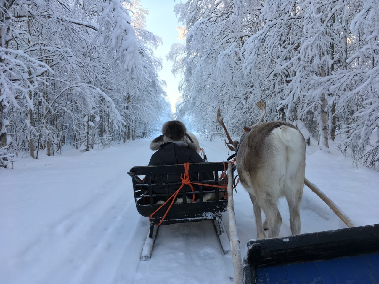 lapland-reindeer-safari-sledge-ride