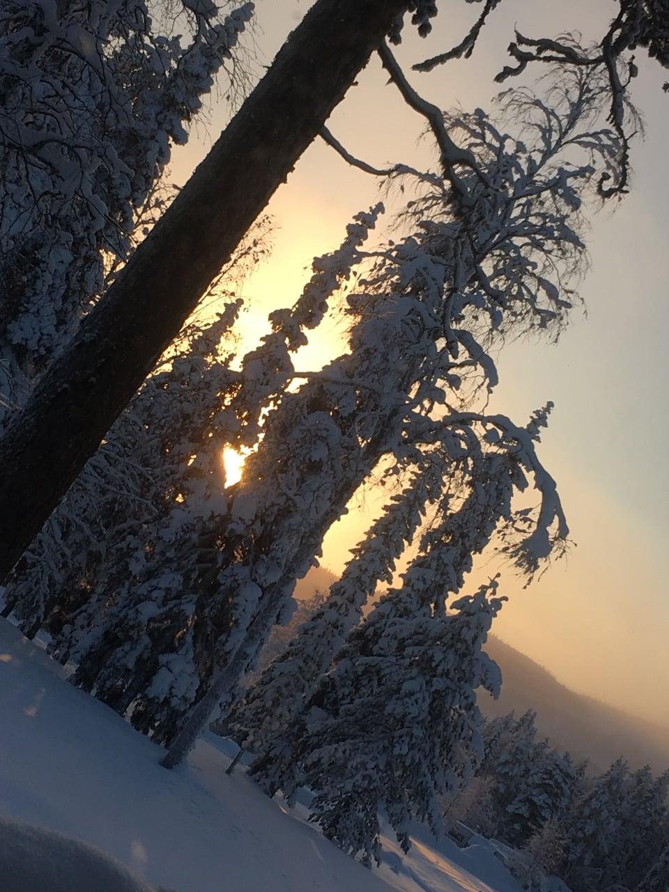 lapland-snowy-sunrise