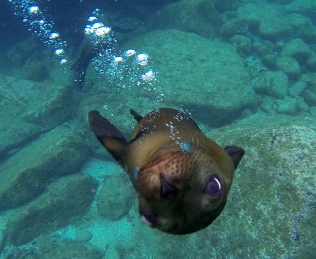 sea-lion-baja-cutie