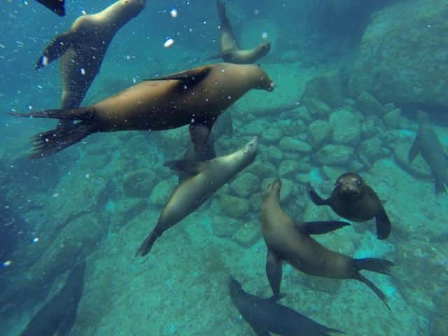 so-many-sea-lions-baja