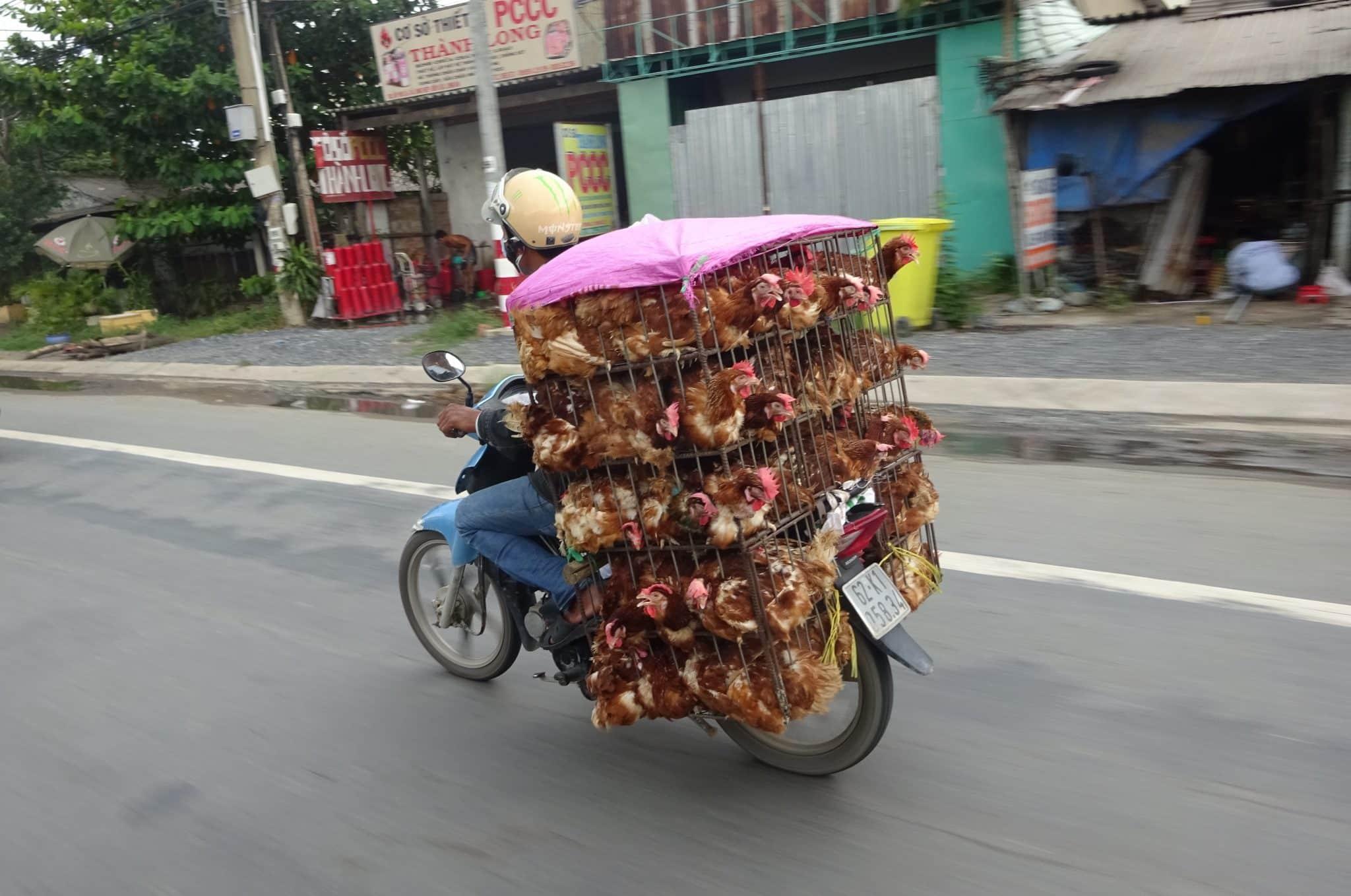 vietnam-hanoi-street-scene-chicken-cart