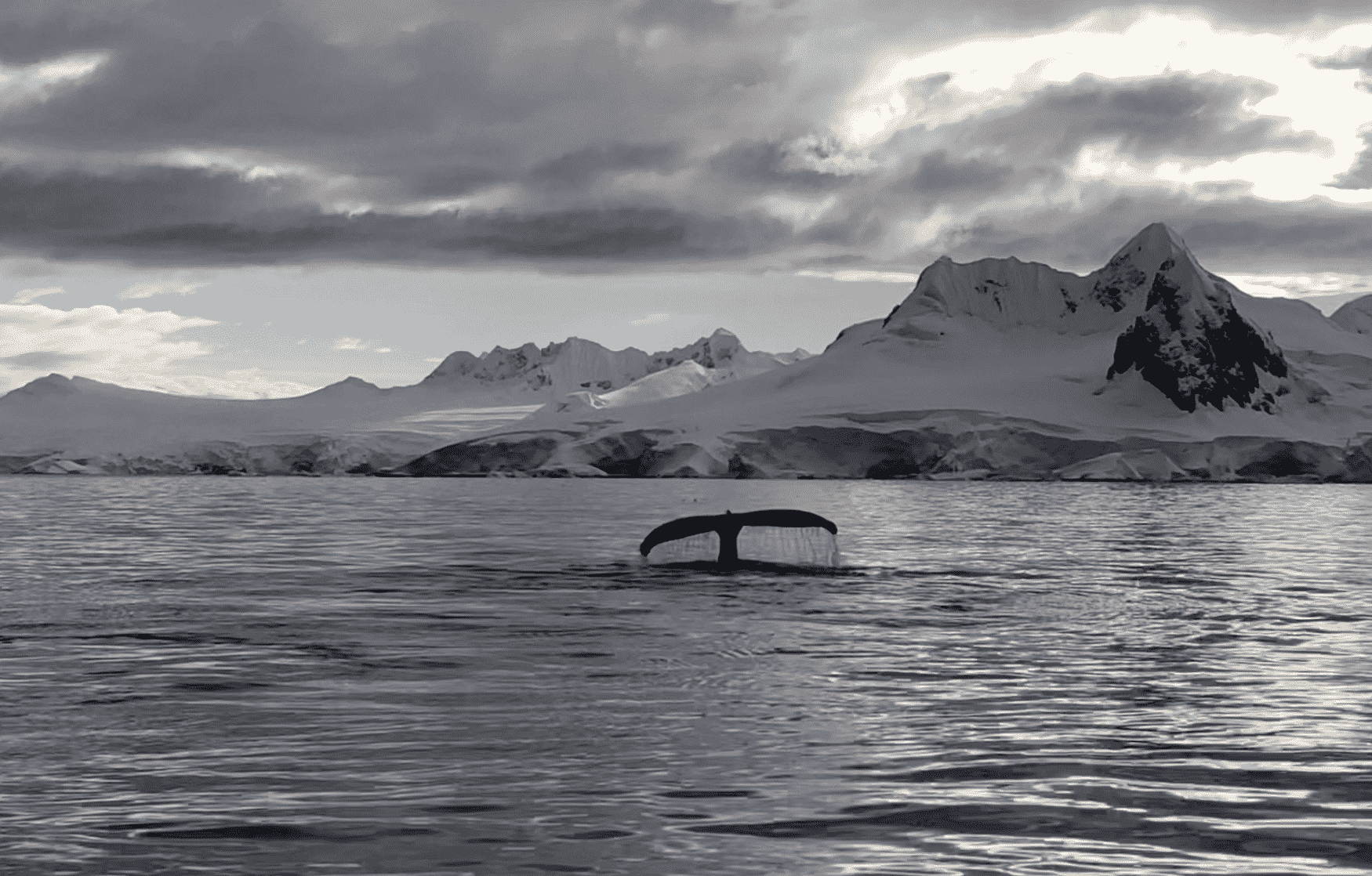 whale_tail_on_snow-capped_bay
